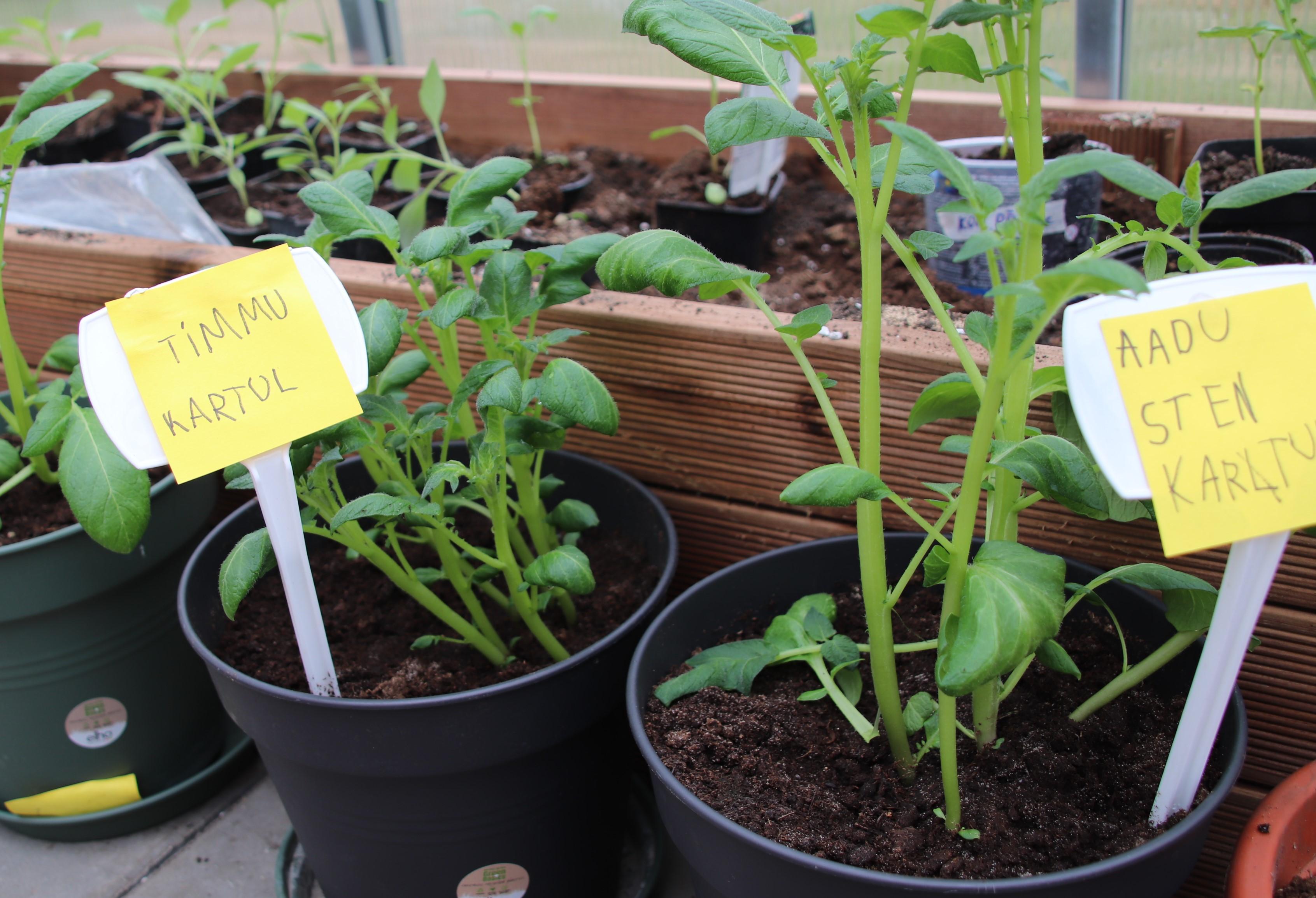 laste-taimed-kasvuhoones.jpg